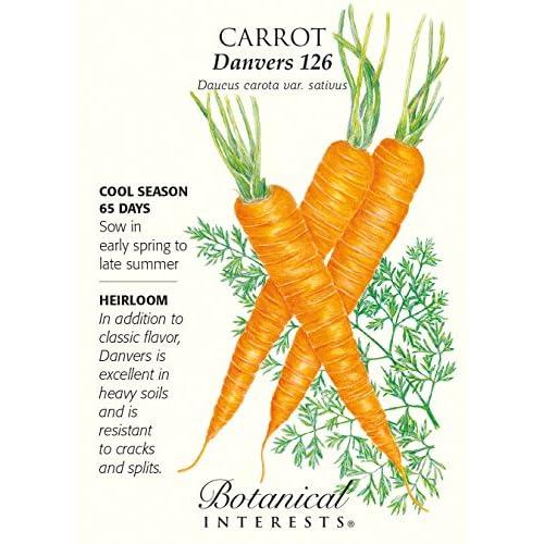 'Danvers 126' Carrot Seeds - 2 grams - Heirloom hot sale
