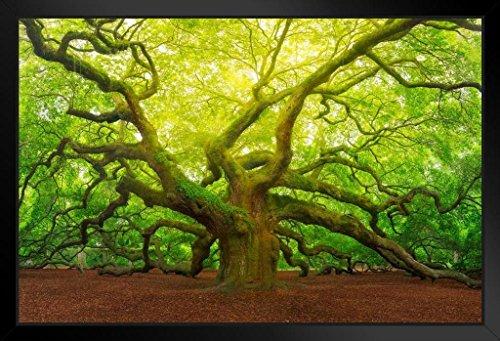 (Angel Oak Tree Canopy Charleston South Carolina Photo Art Print Framed Poster 20x14 inch)