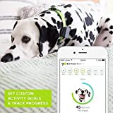 Whistle 3 / GPS Pet Tracker & Activity Monitor