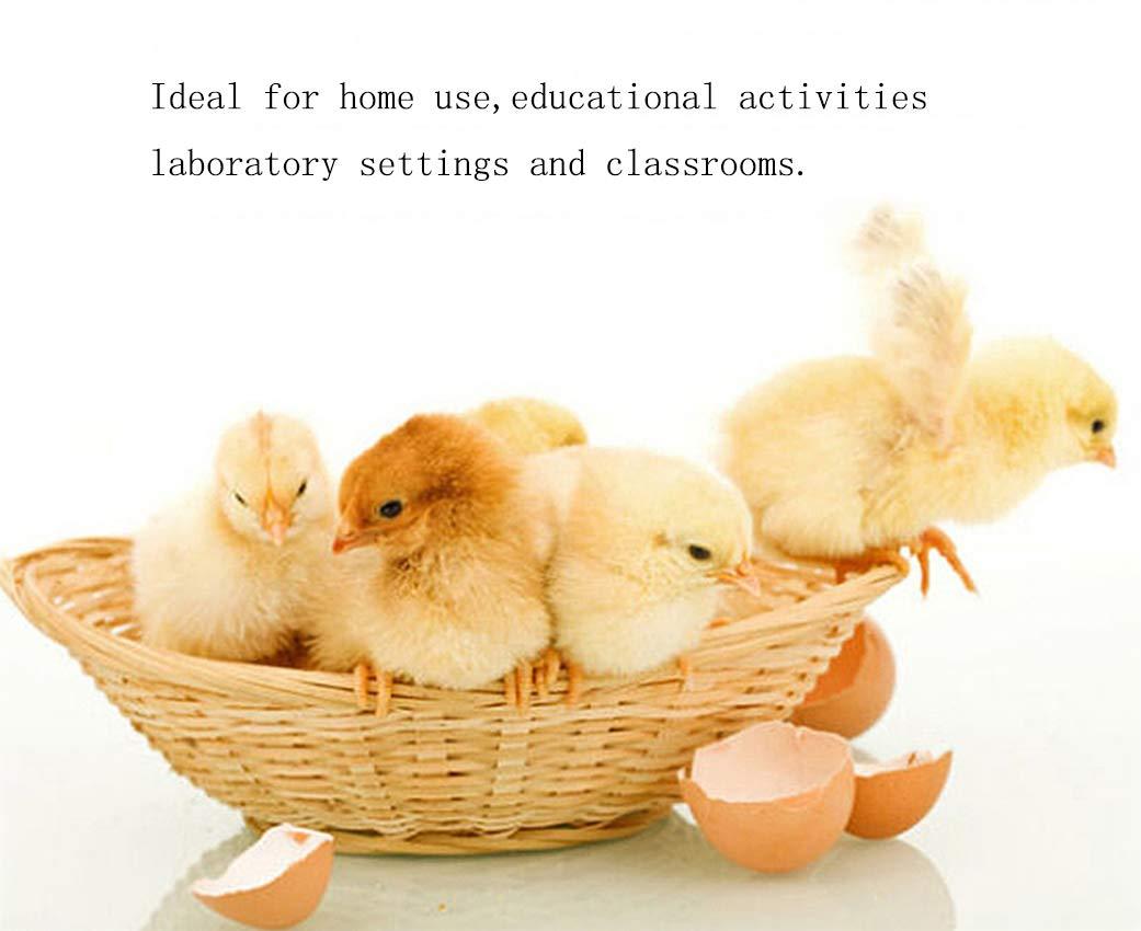 FOTEE Incubatrice di Uova, Digitale Automatica Hatcher Hatcher Hatcher di pollame Intelligente Controllo della Temperatura,bianca_18 Eggs 29e571