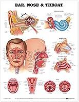 Pruebas Clínicas Para Patología Ósea Articular