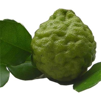 30 Fresh Seeds Thai Kaffir Lime New Harvest Season 2020 Extracted from The Ripe High Germination : Garden & Outdoor