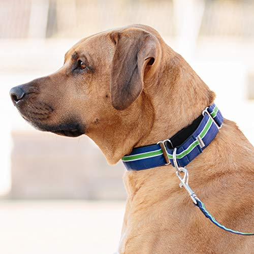 If It Barks - 1.5 Martingale Collar for Dogs - Adjustable - Nylon - Strong and Comfy - Ideal for Training - Made in USA - Medium Finley