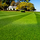 Best Bermuda Grass Seeds - Outsidepride Blackjack Bermuda Grass Seed - 5 LB Review