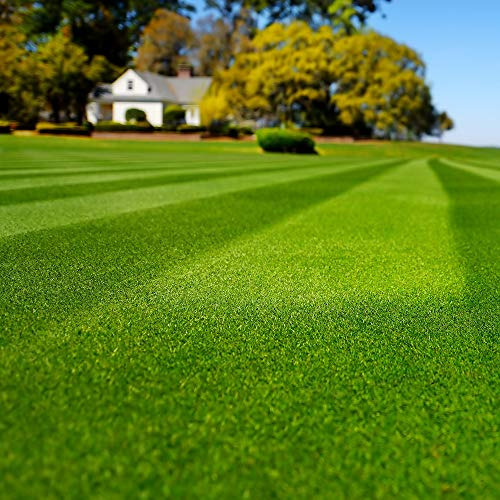 Outsidepride Blackjack Bermuda Grass Lawn Seed - 5 ()