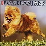 Just Pomeranians 2019 Wall Calendar (Dog Breed Calendar)