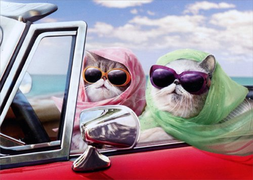 Two Cats In Convertible - Avanti Funny Feminine Birthday Card