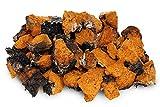 Cheap Chaga 5 LB (80 oz) Small Chunks Wild Harvested Canadian Chaga – Only the Best – Chaga Mushroom Tea