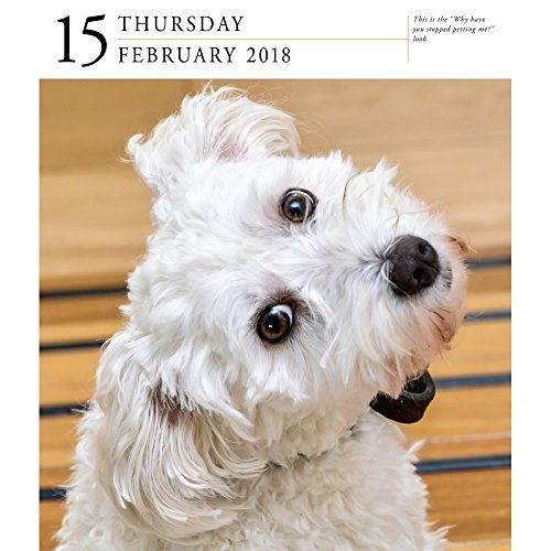 Dog 2018 Page-A-Day Gallery Calendar Photo #2