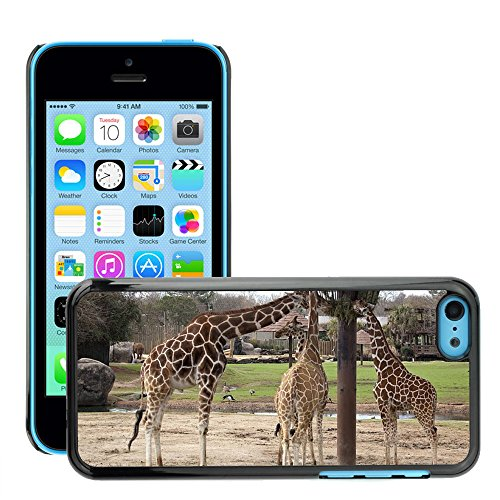 Just Phone Cover Hard plastica indietro Case Custodie Cover pelle protettiva Per // M00139373 Girafes Manger Nourrir zoo de la faune // Apple iPhone 5C