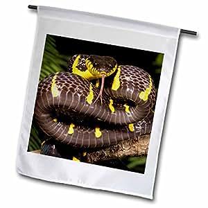 Danita Delimont - Snakes - Mangrove Snake, Southern Asia - US39 JMC0039 - Joe and Mary Ann McDonald - 18 x 27 inch Garden Flag (fl_94203_2)