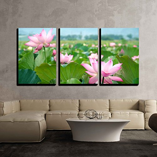 Lotus Flower Blossom x3 Panels