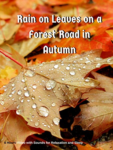 Rain on Leaves on a Forest Road in Autumn - 8 Hours Video with Sounds for Relaxation and (Autumn Eyes)