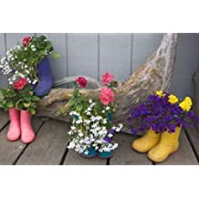 """Alaska, Homer Rubber boots used as flower pots by Dennis Flaherty - 19"""" x 30"""" Giclee Canvas Art Print"""