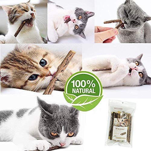 WoLover Natural Silvervine Sticks for Cats, Catnip Sticks Matatabi Chew Sticks Teeth Molar Chew Toys for Cat Kitten Kitty 4