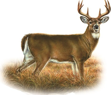 """6"""" Whitetail Buck Deer Hunting Removable Peel Self Stick Wall Decal Sticker Art Hunt Hunter Rustic Lodge Cabin Outdoor Wildlife Nature Home Decor 6 inch wide by 5 inch tall"""