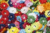 (100) in a Bag Soft Mini Daisy Flowers~2'' 2 Inch Small Flowers Great for Craft Projects