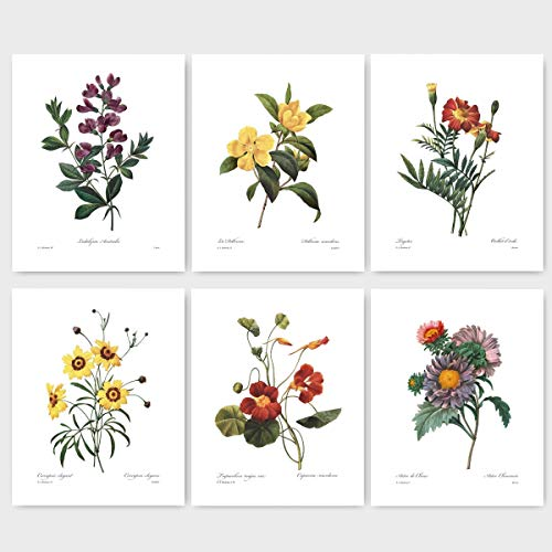 (Set of 6) Botanical Prints (Redoute Flower Wall Art, Autumn Room Decor) Asters, Sweet Pea, Daisy, Marigold – Unframed