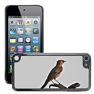 hello-mobile Etui Housse Coque de Protection Cover Rigide pour // M00137126 Marrón Roca Chat en India Chatear Aves // Apple ipod Touch 5 5G 5th