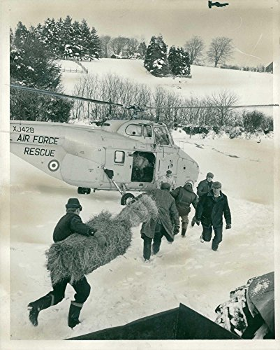 (Vintage photo of PART OF THE SERVICE: FODDER FOR STRANDED ANIMALS.)