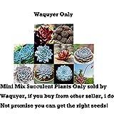 100Pcs Mini Mix Succulent Plants Seeds for Home and Garden Flower Pots, waquyer