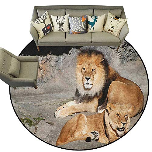 Zoo,Indoor Outdoor Rugs Male and Female Lions Basking in The Sun Wild Cats Habitat King of Jungle D40 Super Soft Carpet Floor Mat Home Decor