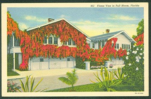 Beautiful Florida Home Flame Vine CURTEICH LINEN Vintage Postcard