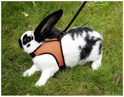 SPORT Arnés para conejos con correa flexible de 120 cm: Amazon.es ...
