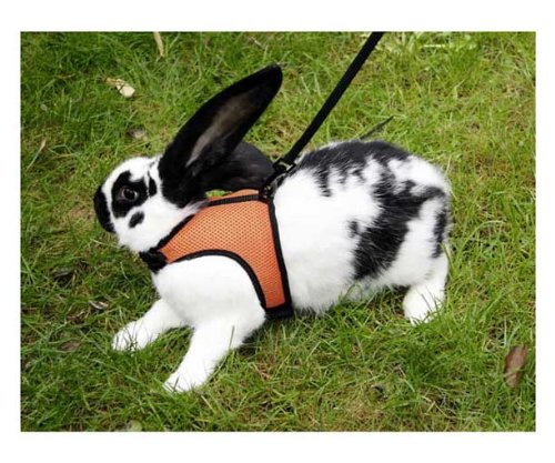 Kerbl Small Pet Harness with Lead