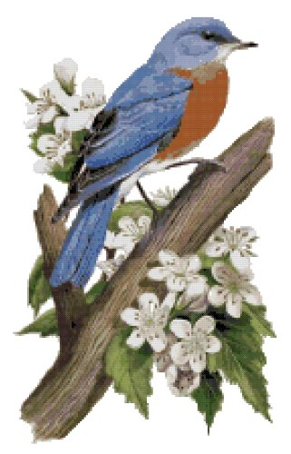Missouri State Bird (Eastern Bluebird) and Flower (Hawthorn Blossom) Counted Cross Stitch Pattern