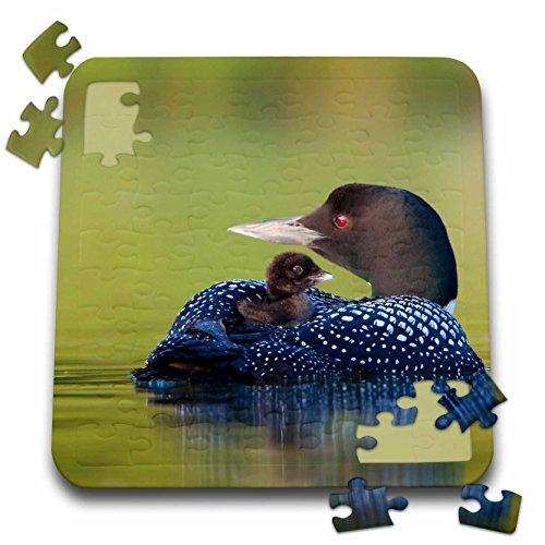 Danita Delimont - Birds - British Columbia, Common Loons-CN02 GLU0001 - Gary Luhm - 10x10 Inch Puzzle (pzl_70310_2)