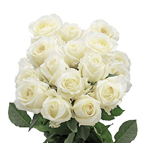 GlobalRose 50 Fresh Cut White Roses - Fresh Flowers Delivery- Long Stem and Large Bloom Roses