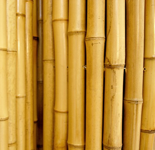 Natural Rolled Bamboo Fencing 3 4 Quot D X 3 H X 8 L Buy