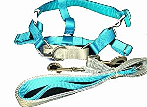 """2 Hounds Design Freedom No-Pull Dog Harness and Leash, Adjustable Comfortable Control for Dog Walking, Made in USA (XXLarge 1"""") (Turquoise)"""