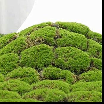 Amazon Com Xhsp Artificial Grass Rug Fake Moss Grass Turf