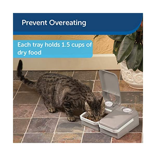 PetSafe Eatwell 2 Meal Pet Automatic Feeder for Cats and Dogs 2