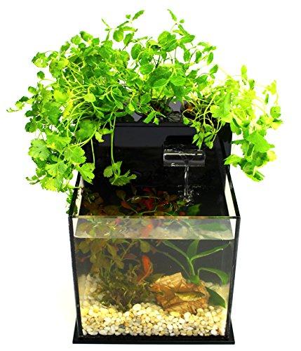 Fin to Flower Aquaponic Aquarium - Mini System A (Black) by Fin to Flower Aquaponics
