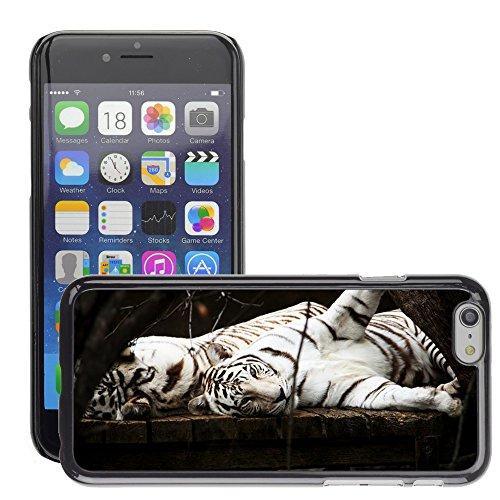 """Just Phone Cases Hard plastica indietro Case Custodie Cover pelle protettiva Per // M00127864 White Tiger Cat Predator animale // Apple iPhone 6 PLUS 5.5"""""""
