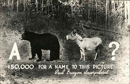 A Bear Donkey Other Animals Original Vintage Postcard