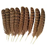Eagle feather,Hgshow 10pcs Touch of Nature eagle feathers 6-8 inches
