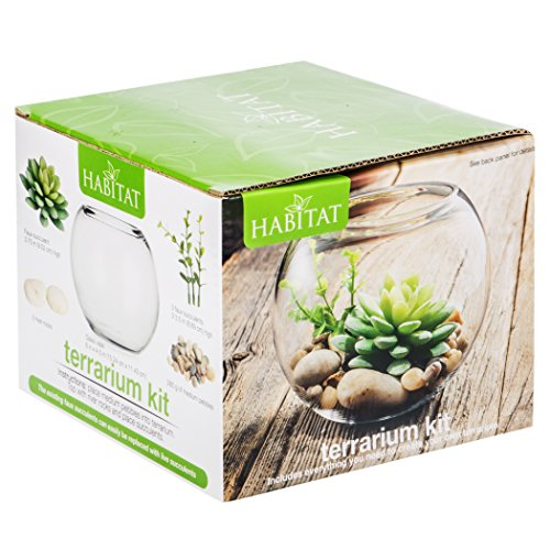 Succulent and Air Plant Terrarium DIY Kit With Faux Succulents ... on door with rocks, planter with rocks, baskets with rocks, tray with rocks, fish with rocks, plate with rocks, gold with rocks, cat with rocks, pot with rocks, ornaments with rocks, dog with rocks, tile with rocks, clocks with rocks, chair with rocks, decor with rocks, ring with rocks, container with rocks, box with rocks, lamp with rocks, plant with rocks,