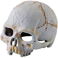 Exo Terra Primate Skull, Small