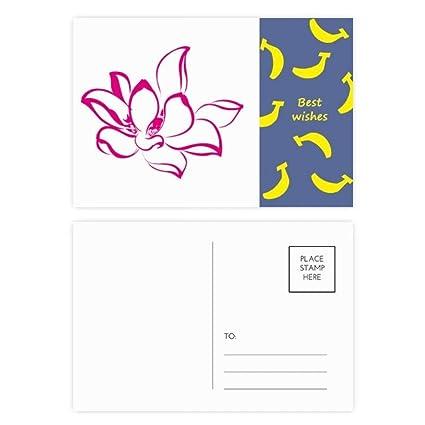 Amazoncom Plant Flower Pink Lotus Flower Banana Postcard Set