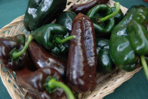 Ancho Poblano Chile Pepper Seeds, Chili, NON-GMO, Variety Sizes 64k