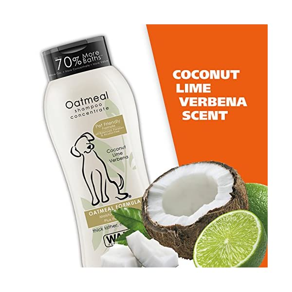 Wahl Dry Skin & Itch Relief Pet Shampoo for Dogs – Oatmeal Formula with Coconut Lime Verbena & 100% Natural Ingredients – 24 Oz 6
