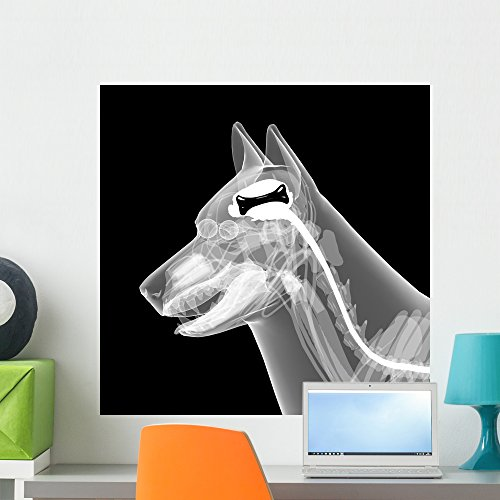 Dog Anatomy X-ray - 5