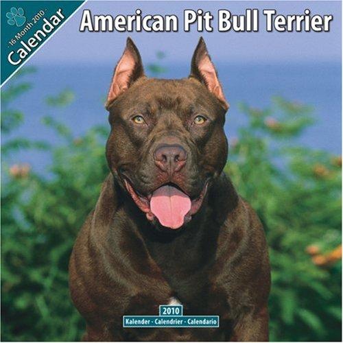 Bull Terrier 2010 Calendar - American Pit Bull Terrier 2010 Wall Calendar