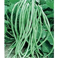 Long Bean Seeds 15g Snake/Yard-Long Asparagus Bean Red Noodle Pole Bean Garden Vegetable Organic Green Fresh Chinese Seeds for Planting outside door Cooking Dish Taste Sweet Delicious(Long Bean seeds)