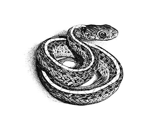 Garter Snake (Print - 17x21 in.)