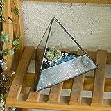 "4.7"" Black Miniature Pyramid Clear Glass Geometric Terrarium Indoor Tabletop Planter Desktop Box Garden Diy Display Flower Pot for Small Succulent Air Plants Moss Fern"